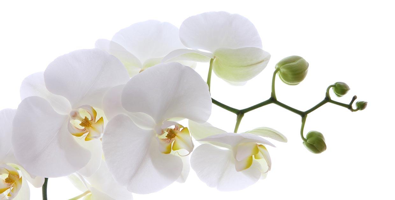 Allergologie Hyposensibilisierung Blüten
